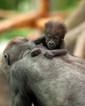 Zoo Antwerpen Ledenvoordeel